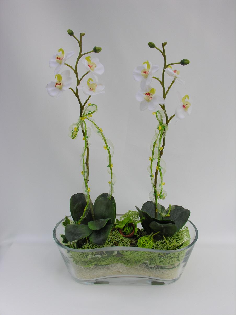 Topfpflanzen Verschenken topfpflanzen